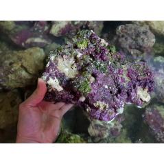Living rocks (Indonesia) /kg