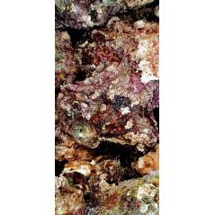 Living rocks (Caribbean) by kg