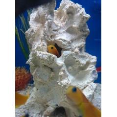 Jawfish home