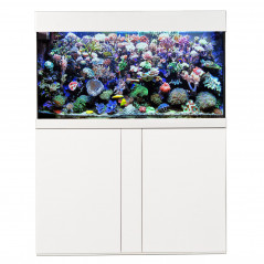 Complete reef tank Magnifica 100